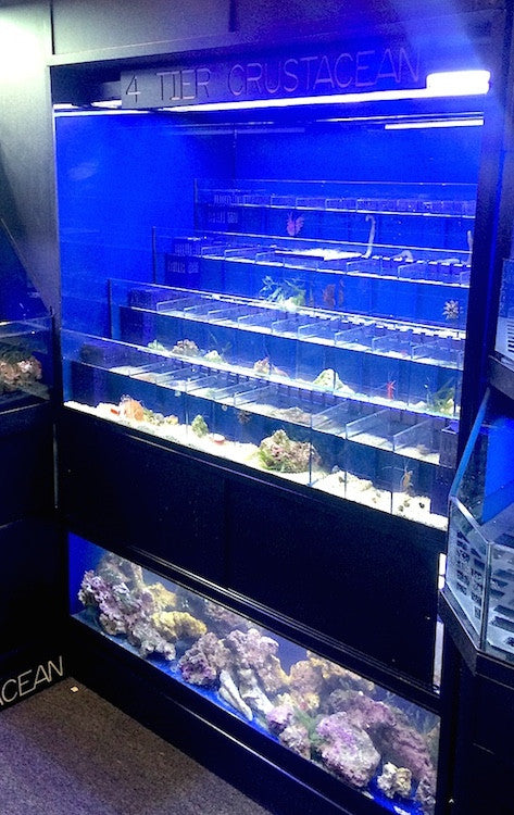 Marine Crustacean Enclosure