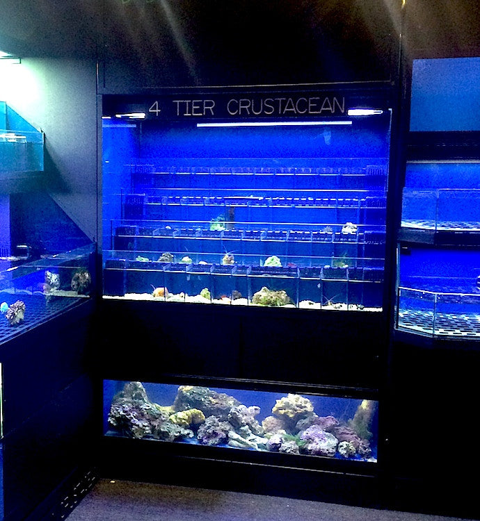 Commercial Marine Crustacean Display Racks