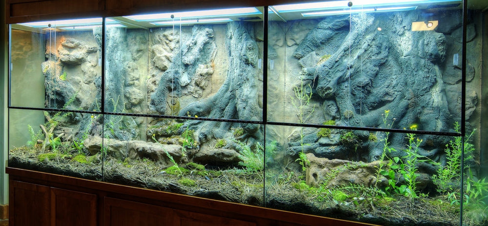 Custom Design Terrarium by DAS Aquariums
