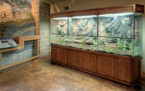 how to build a monitor lizard enclosure