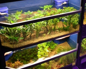 Freshwater Fish Enclosures