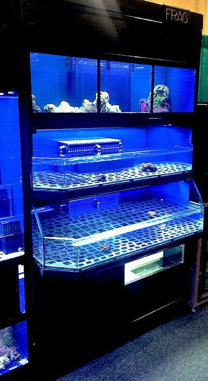 Marine Frag Enclosure