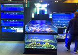 Commercial Live Rock Frag Crustacean Display