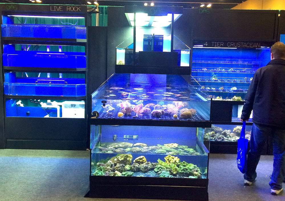 Marine Custacean Display in between Marine Fish Enclosures
