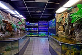 3D Aquariums in a Fish Store with Backgrounds and Light Canopies