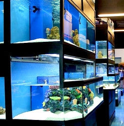 Marine Fish Shop Unit