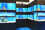 Marine Fish Enclosures