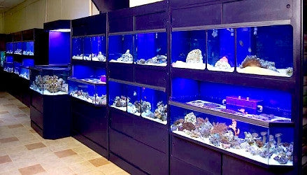 Marine Fish Setups in Pet Store