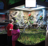 3D Aquarium in a Childrens Nature Center