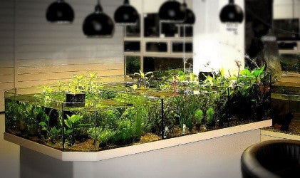 Aquatic Plant Tiered Display