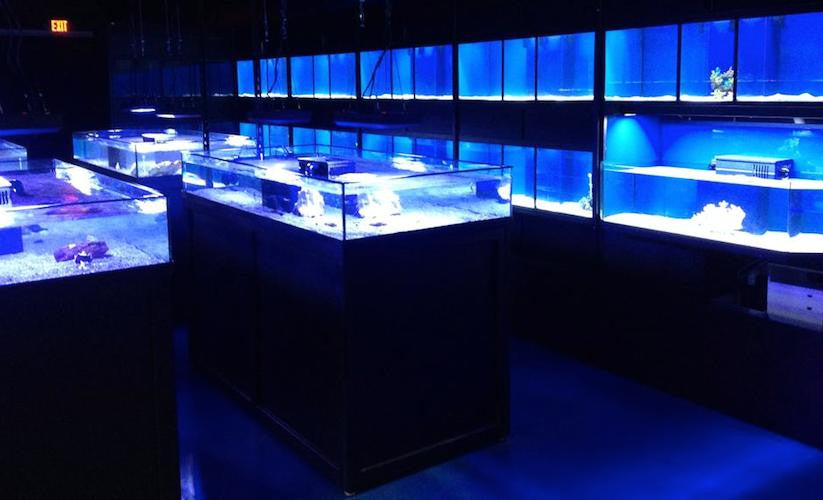 Commercial Frag or Coral Display Tanks