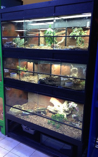 Commercial Reptile Display Racks