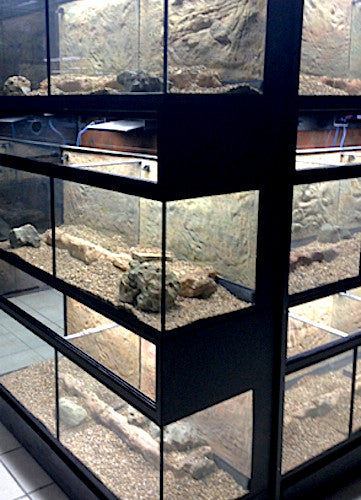 DAS Aquariums Thrive Enclosures with Bio Box Filtration