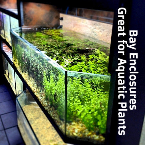 DAS Aquariums THRIVE Bay Enclosure Plant Merchandiser