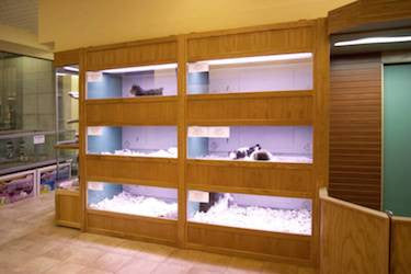 Puppy or Kitten Enclosures Kennels Store Displays with Oak Fronts