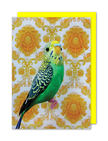 Budgie - Margery