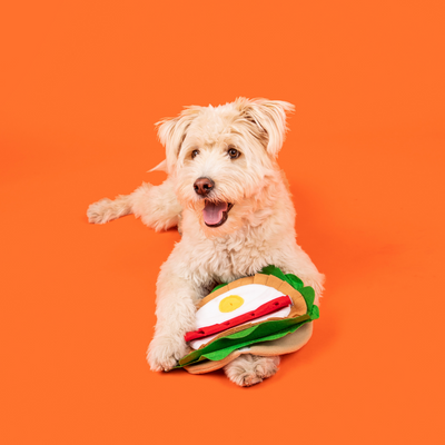 Maltipoo puppy posing with a burrito snuffle toy in orange background