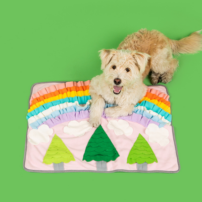 Maltipoo puppy posing with a rainbow forest dog feeding and snuffle mat in green background