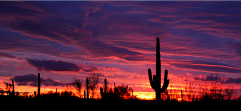 Cactus sunset arizona