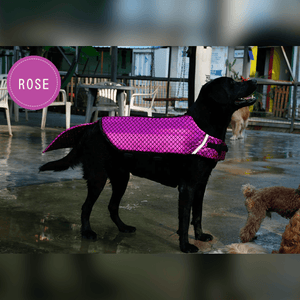 Swimming MerDog Life Jacket