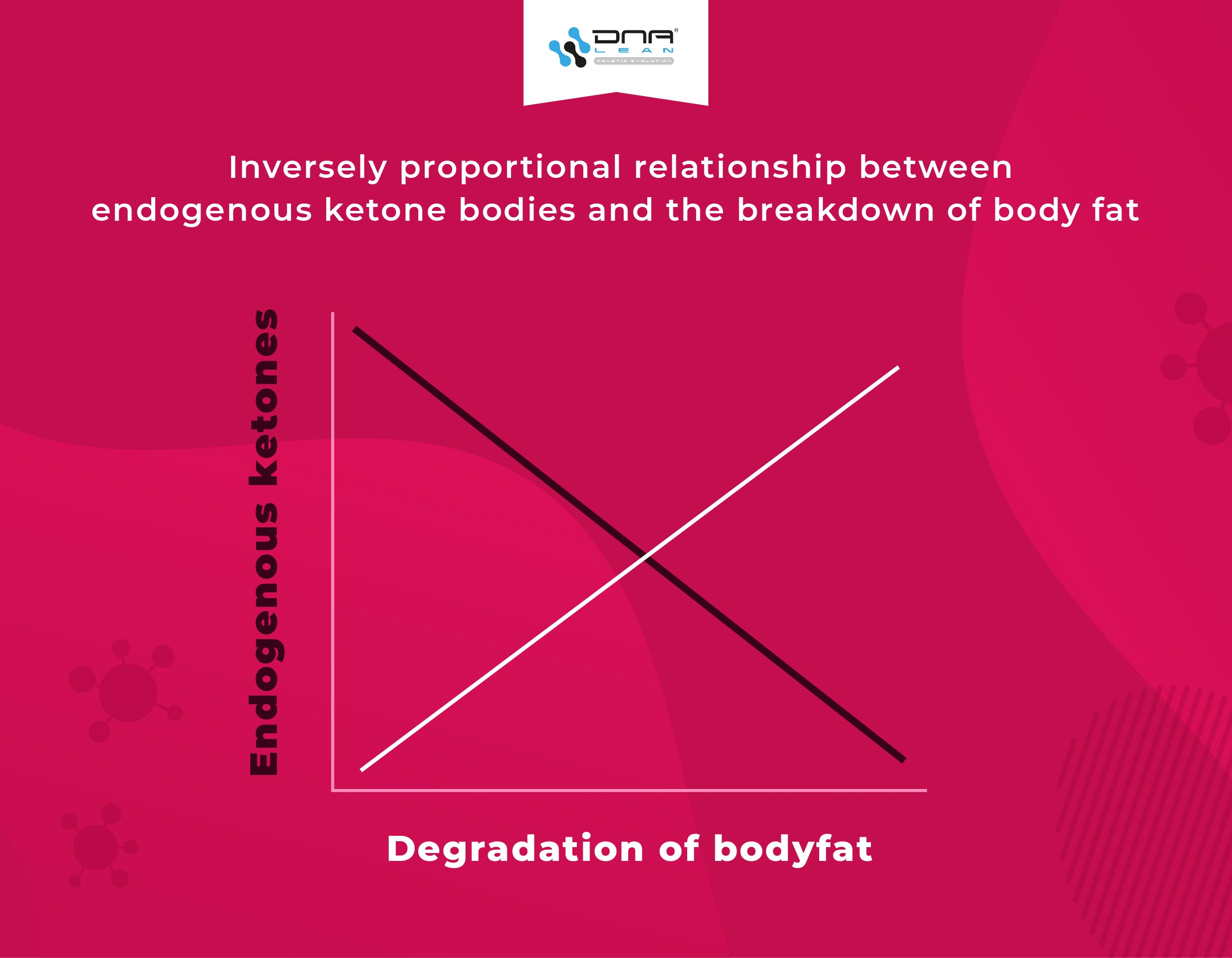 Inverse relationship between ketone bodies and the degredation of body fat mass