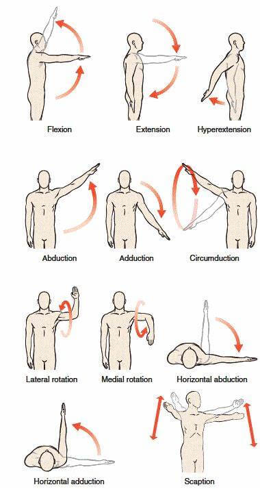 Functions and movements of the glenohumeral joint