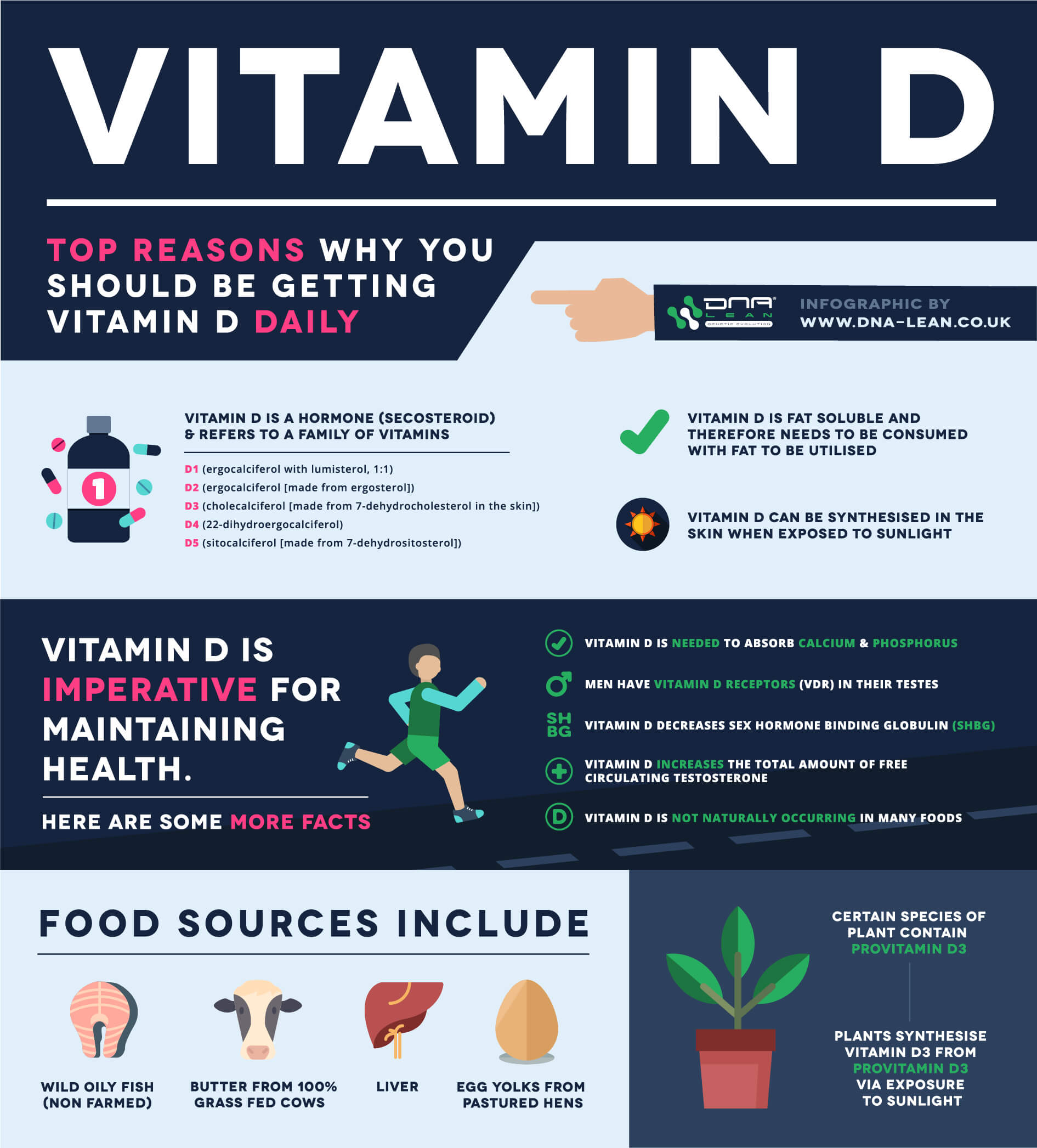 Vitamin D boosts testosterone infographic