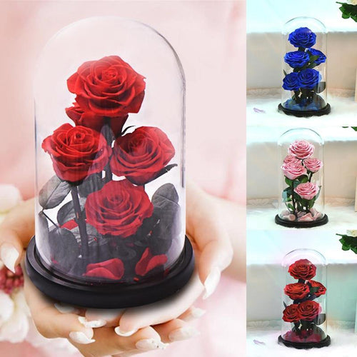 Rose Flowers Preserved in Glass Dome