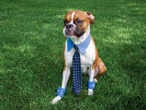 Dog in Business Man Costume