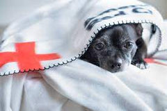 Pup with American Red Cross