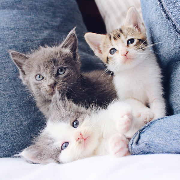 Three kittens lying on a bed.