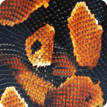 Load image in gallery viewer, snake hydroprinting sheet