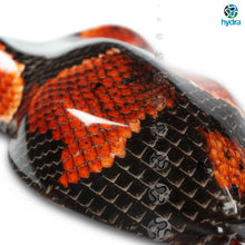 Load image into gallery viewer, HPA-003 Snake Skin Water Transfer Printing Foil