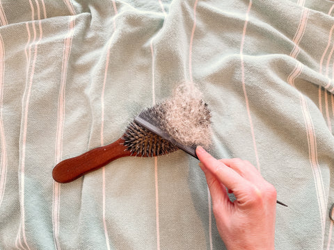 A picture of a boar bristle and nylon hairbrush, with a comb removing the loose debri and hair from it. The background is a blue Stray & Wander towel.