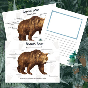 Brown Bear Anatomy Pack