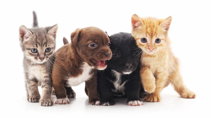 Persnickety Pets: Our Guide to Spay and Neuter Resources
