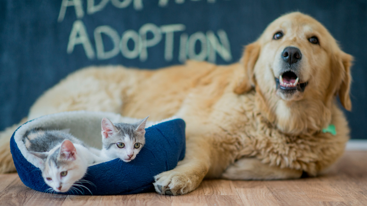 Persnickety Pets: 10 Questions to Ask Yourself Before Adopting a Pet