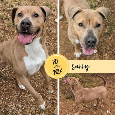 Persnickety Pets: Pet of the Week Sunny