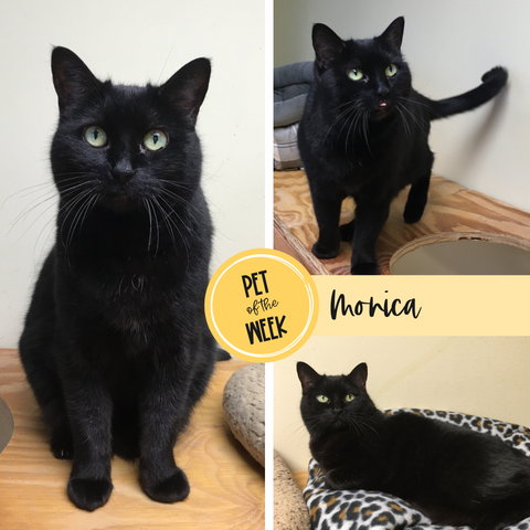 Persnickety Pets: Pet of the Week Monica