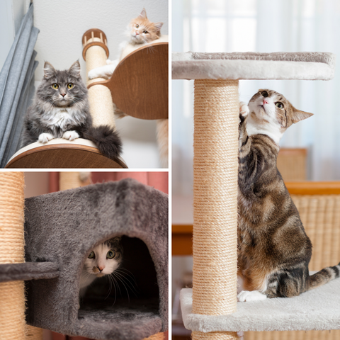 Persnickety Pets: Cat behaviors