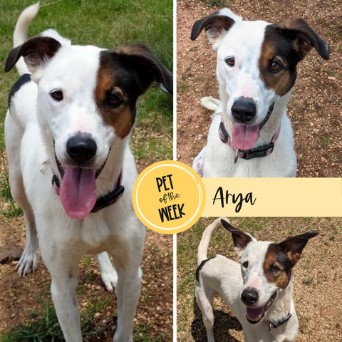Persnickety Pets: Pet of the Week, Arya