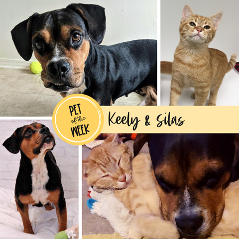 Persnickety Pets: Pet of the Week Keely and Silas