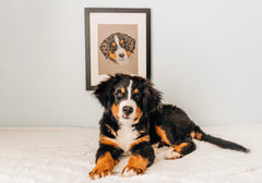 Persnickety Pets: custom hand-drawn pet portrait, Brittany Tinsley Photography