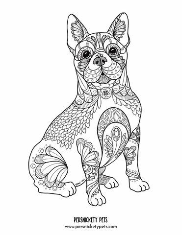 Persnickety Pets: Chloe Zen art coloring page