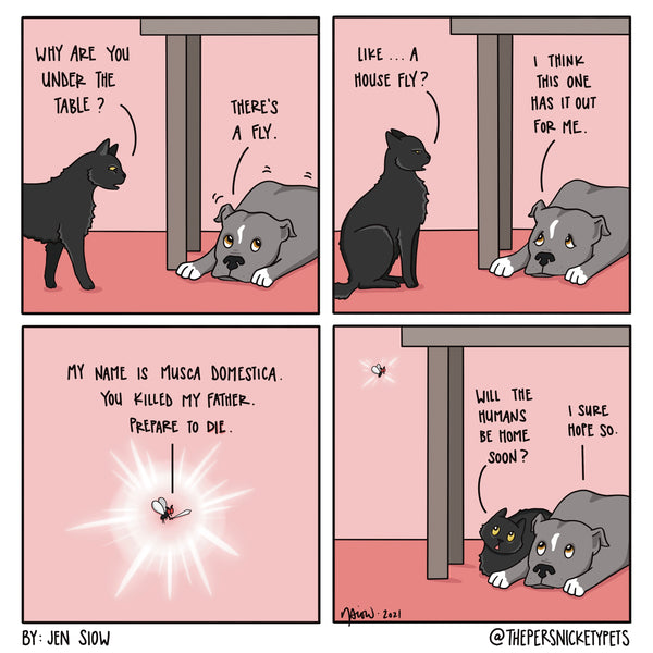 """The Persnickety Pets comic: """"Housefly"""" 6/27/21"""