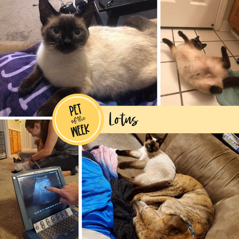 Persnickety Pets: Pet of the Week Lotus