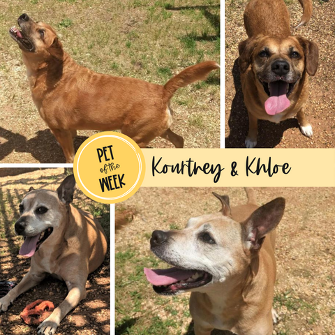 Persnickety Pets: Pet of the Week Kourtney and Chloe