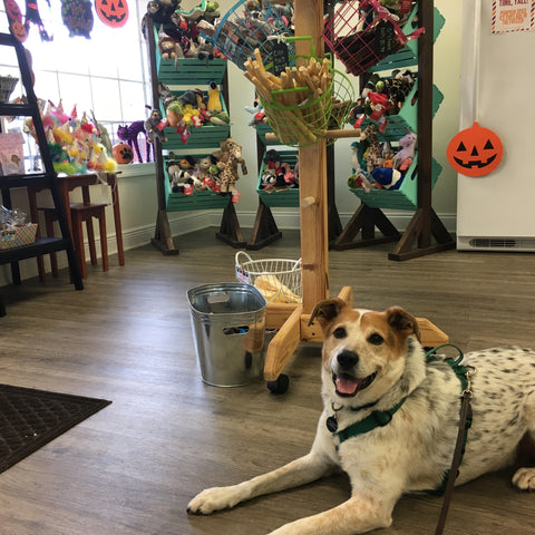 Persimmon Peak: Balou at Dog Days Barkery, Mobile, AL