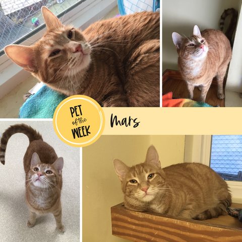 Persnickety Pets: Pet of the Week, Mars