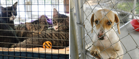 Persnickety Pets: cats and dogs awaiting adoption at the Mobile SPCA